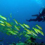 Einzigartige Unterwasserwelt im Korallenriff vor Australien