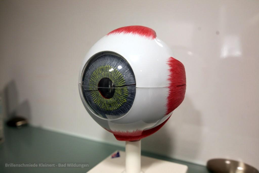 Brillenschmiede Kleinert